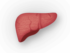 Liver with Fibrosis